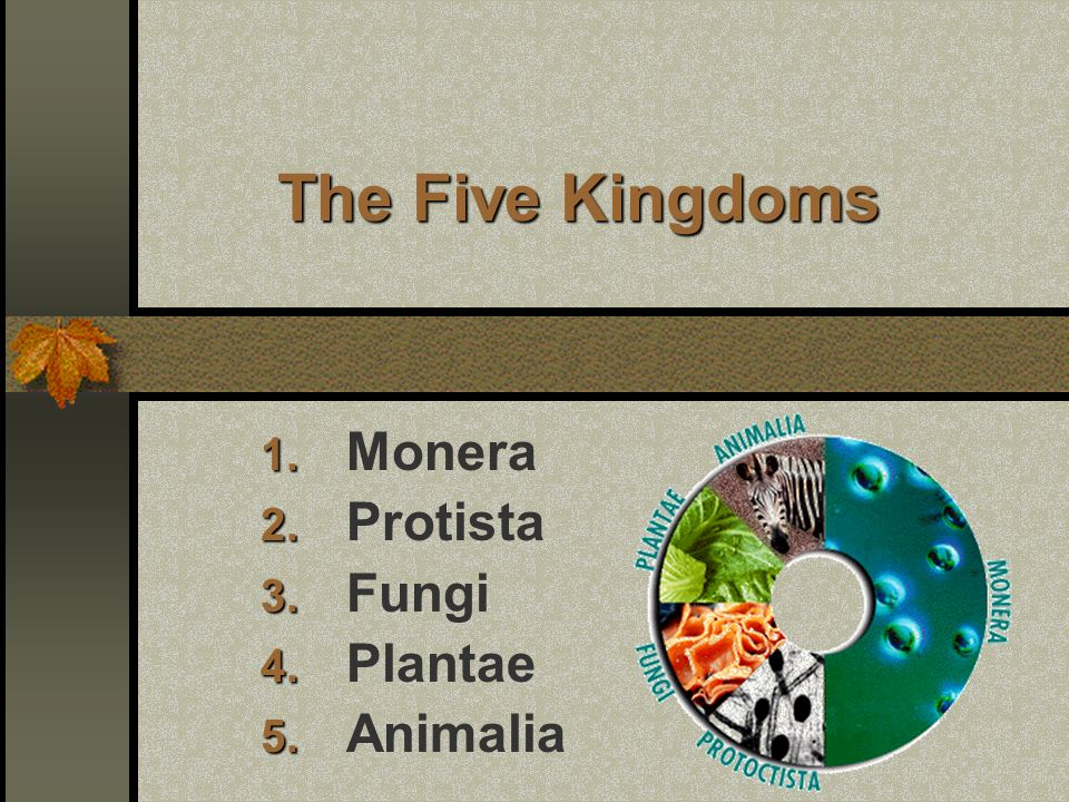 Printable Worksheets five kingdoms of living things worksheets : Ppt on kingdom monera pdf