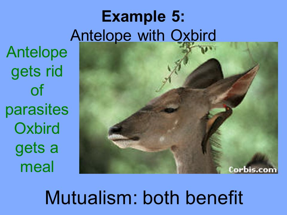 what is an example of a mutualism relationship