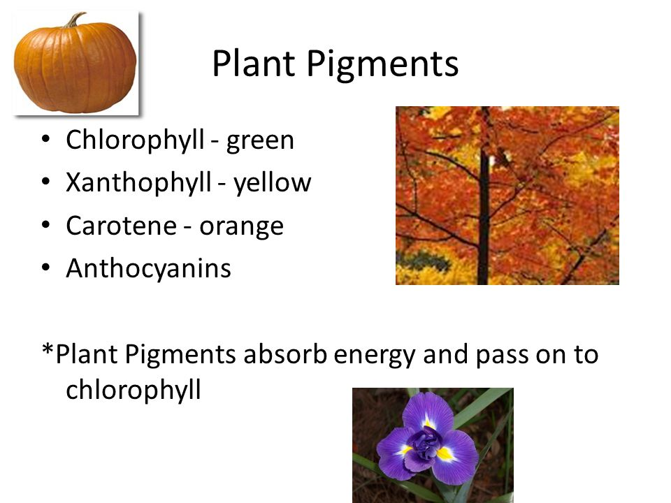 light reactions and plant pigments Zenumerate the steps involved in the light and dark reactions of photosynthesis  green parts of the plant,  utilized for photosynthesis these pigments, that.