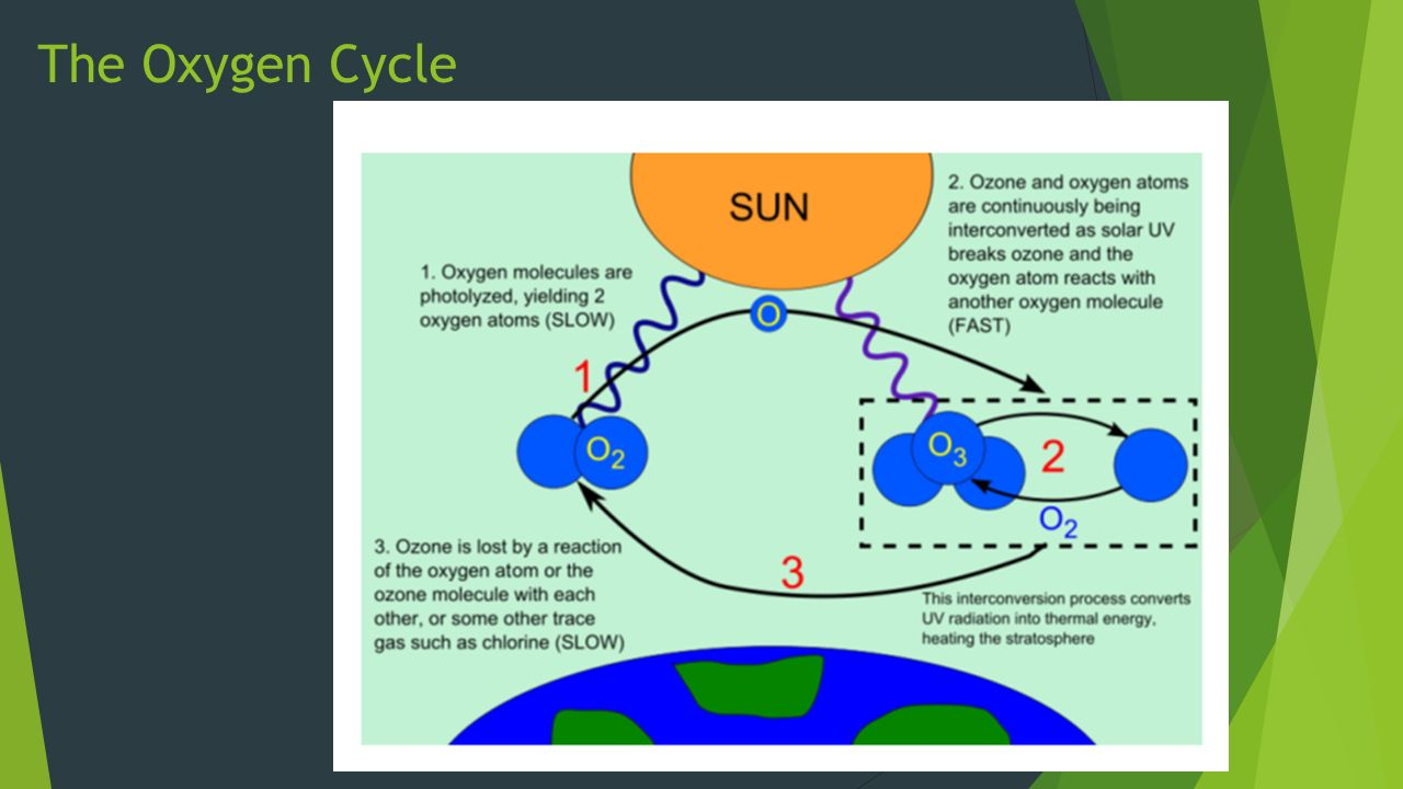 oxygen cycle Teacher's instruction science safari e 2 outside with page objectives 1 the student will be able to label diagrams to understand the water cycle, oxygen cycle, carbon cycle.