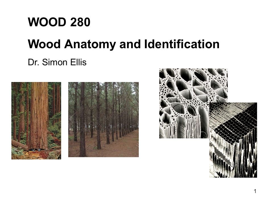 Wood Anatomy and Identification - ppt video online download
