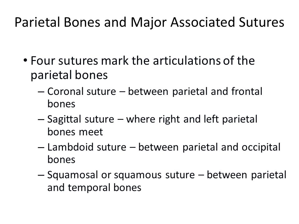 bossing of frontal and parietal bones meet
