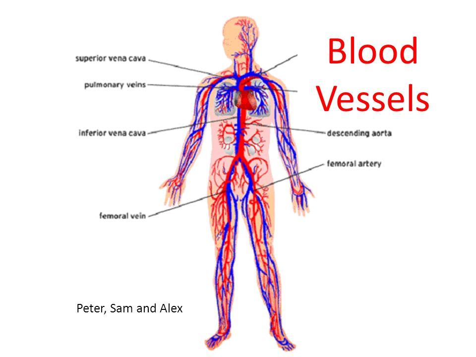 Blood Vessels Peter Sam And Alex Ppt Download