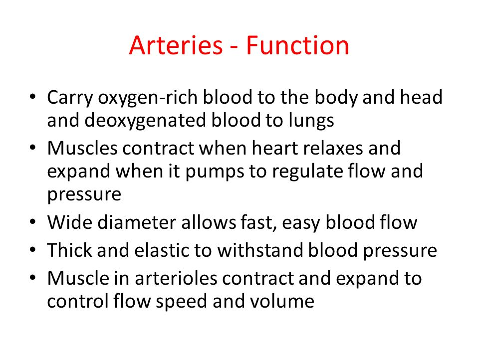 Attractive Arteries Function Picture Collection - Anatomy And ...