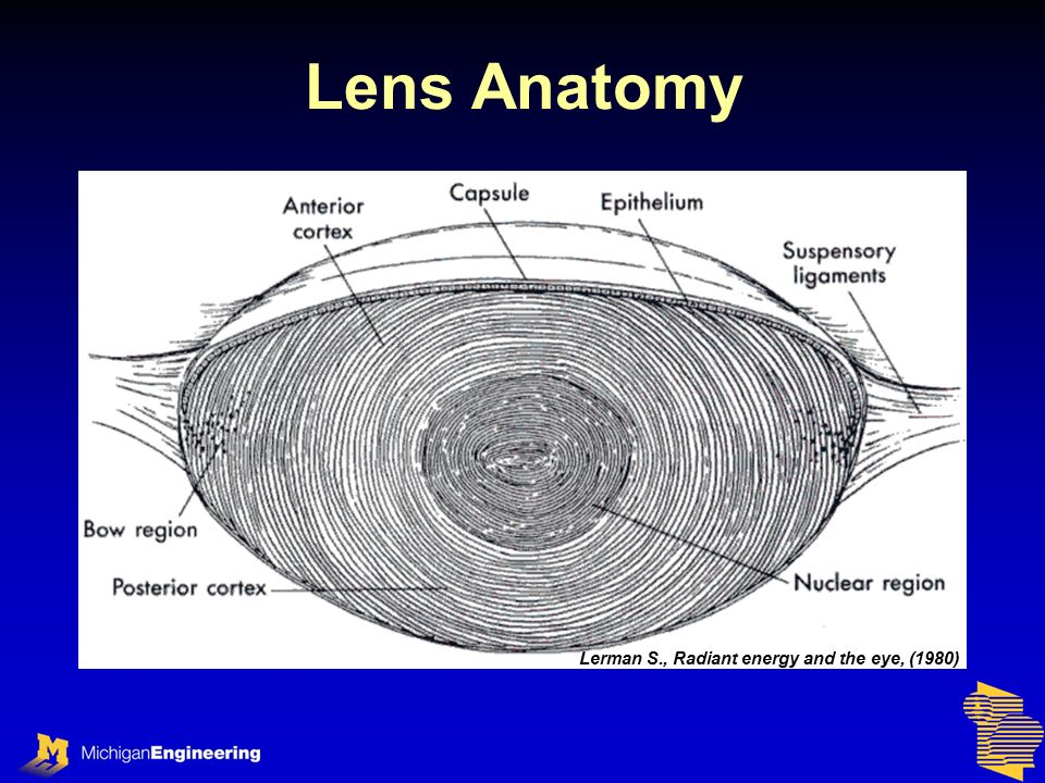 Beautiful Eye Lens Anatomy Gift - Anatomy And Physiology Biology ...