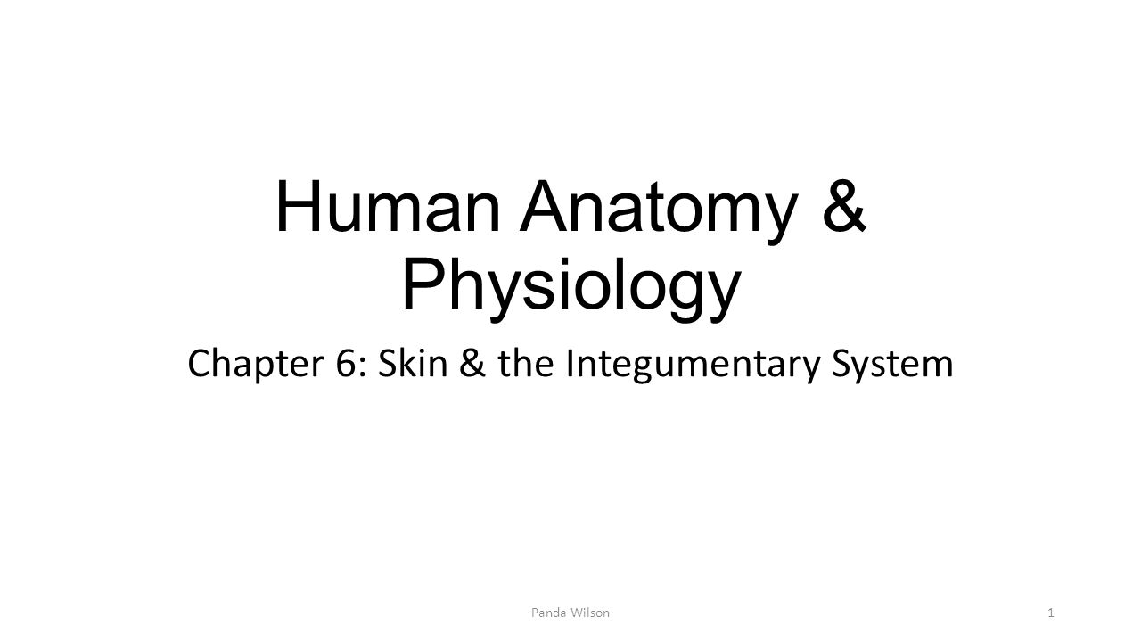 Human Anatomy & Physiology - ppt video online download