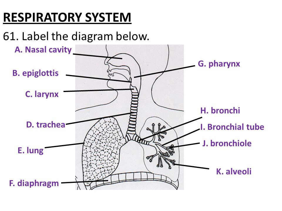 what are the steps of the scientific method? - ppt video ... nasal trachea diagram