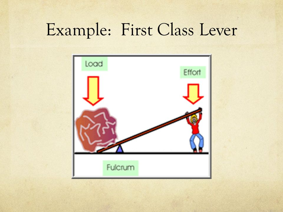 Outstanding First Class Levers Pattern Human Anatomy Images