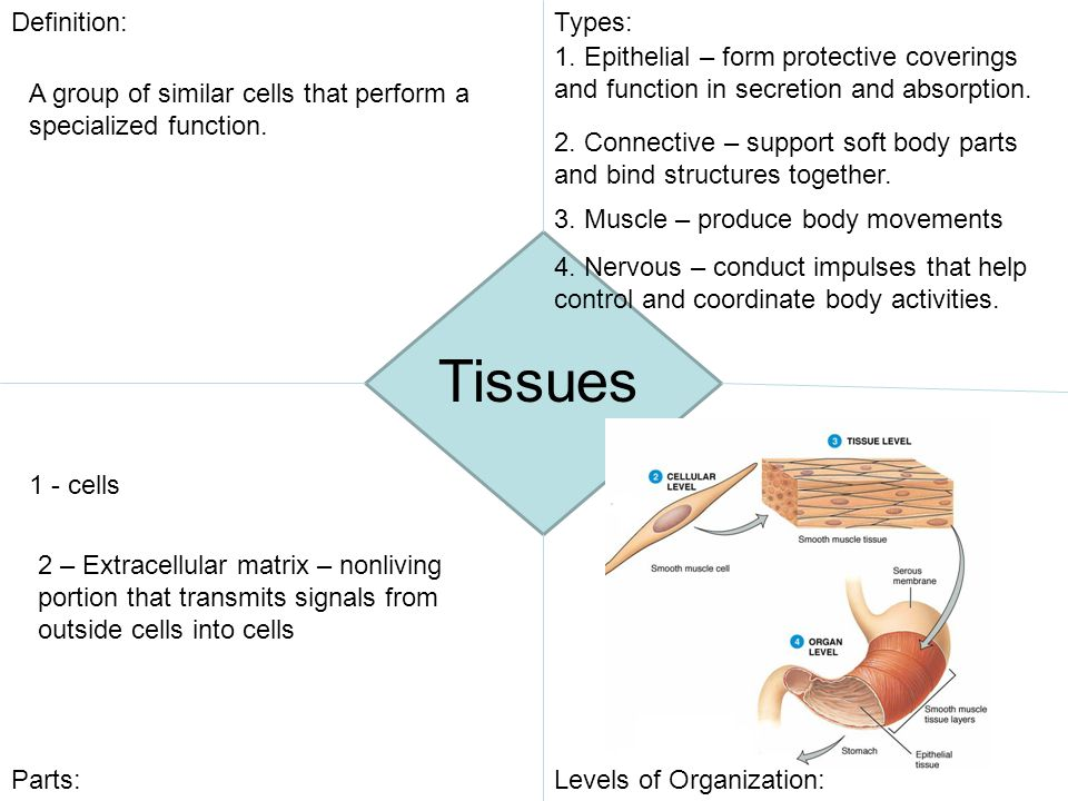Tissues Definition: Types: - ppt video online download