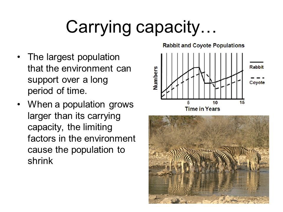relationship between carrying capacity and limiting factors in the rainforest