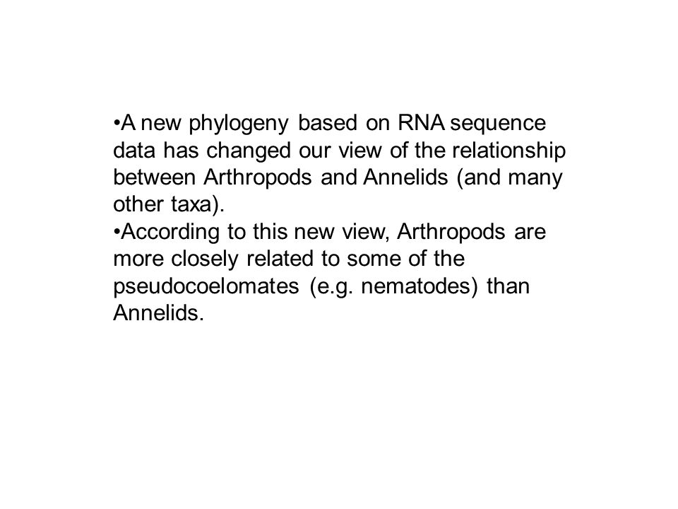 annelids and arthropods evolutionary relationship between organisms