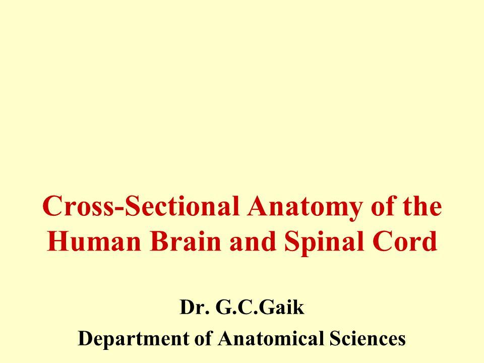 Cross sectional anatomy study guide