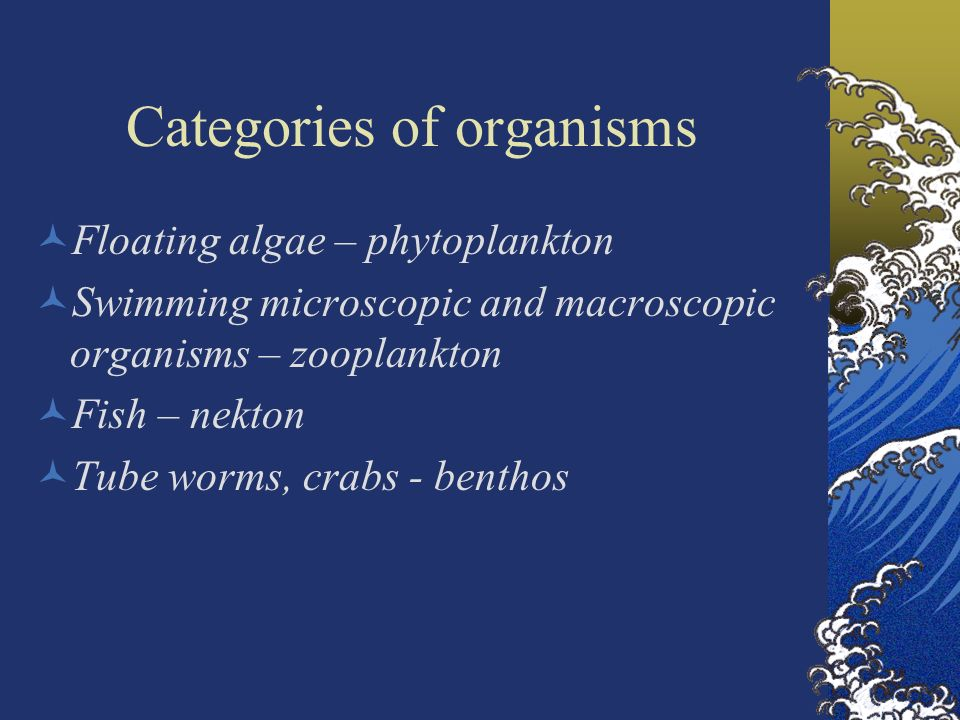 3 categories of organisms Introduction this chapter will look at different types of microorganisms it will discuss their cell structure and functions it will also discuss the position of microbes in food chains and their role in the biosphere.