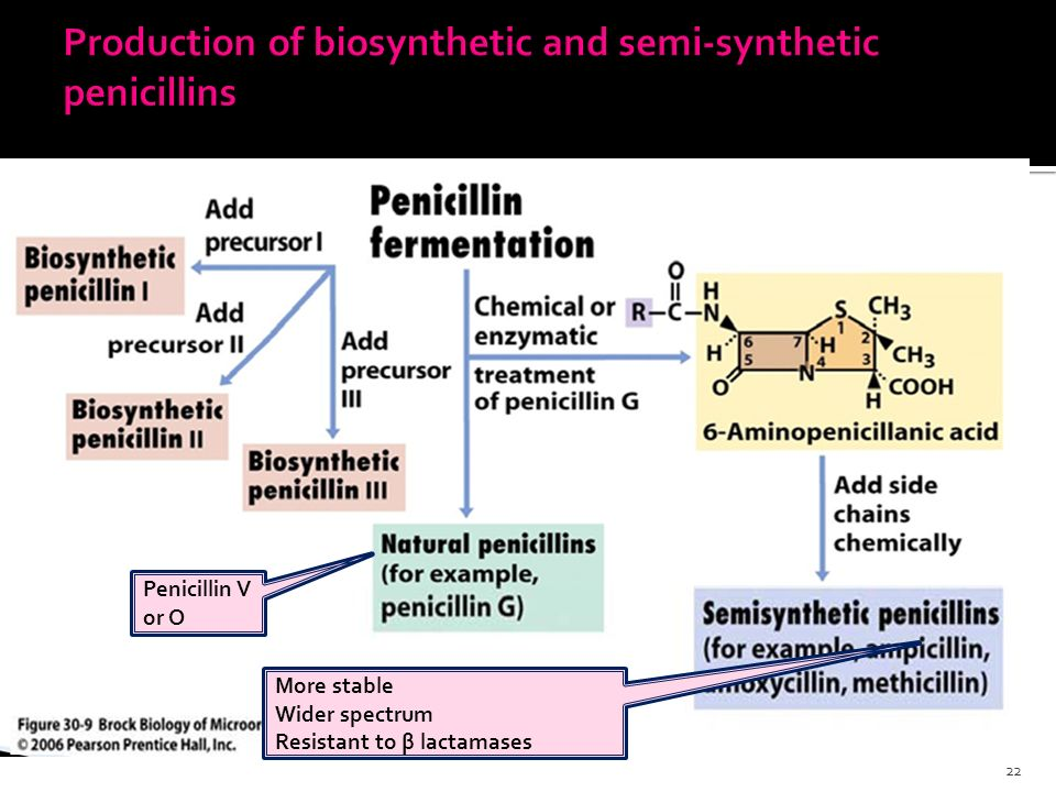 production of penicillin through fermentation #27 use of microorganisms to manufacture antibiotic penicillin  the production of antibiotic penicillin is  thousands of glass fermentation vessels like.