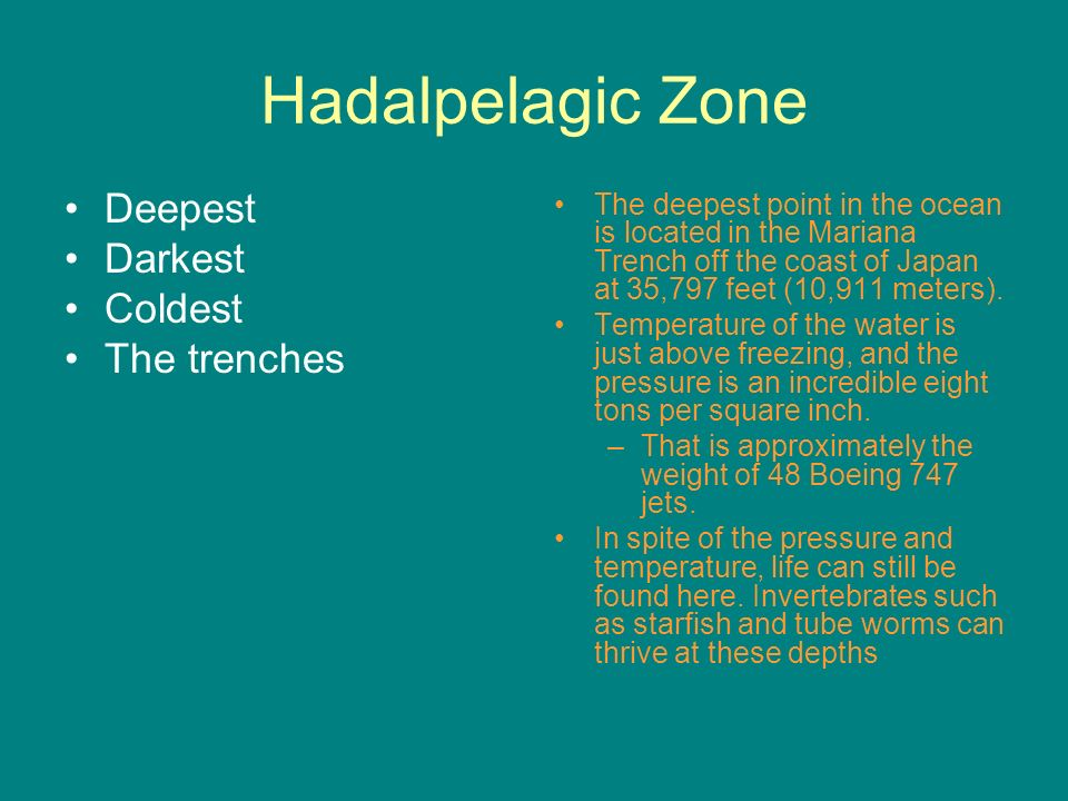 Opening assignment day 1 ppt video online download 38 hadalpelagic zone deepest publicscrutiny Images