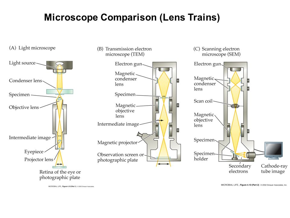 Chapter 4 microscopy and cell structure ppt video online download 6 microscope comparison lens trains ccuart Images