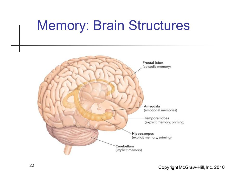Chapter 6 Memory Ppt Video Online Download