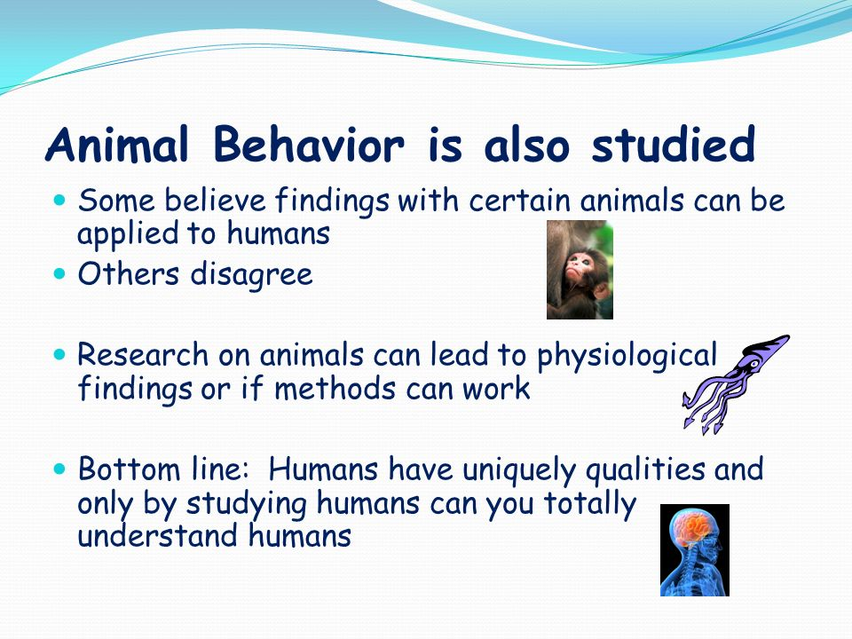 Animal behaviours and reactions applied to human psychology
