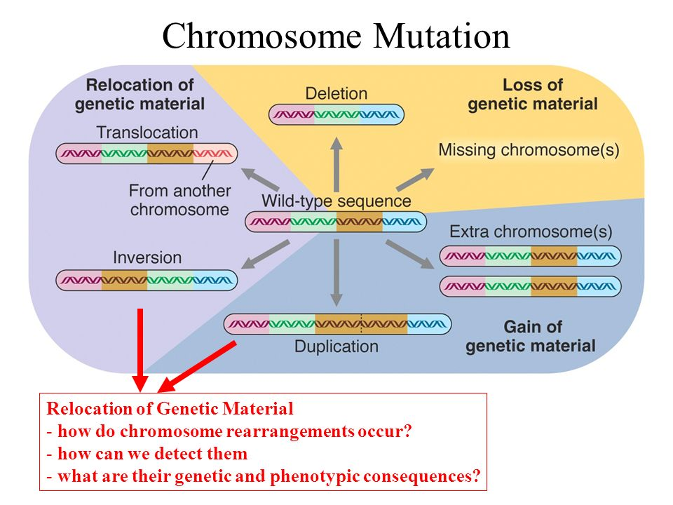 Chromosomal rearrangements in cancer