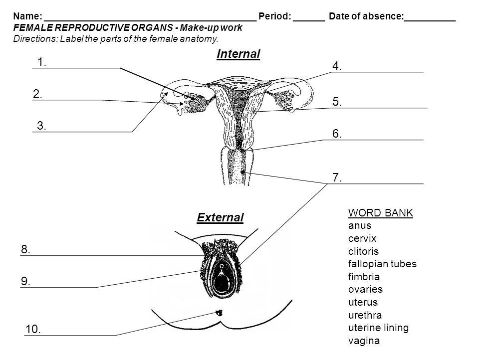 Internal External WORD BANK anus cervix - ppt video online download