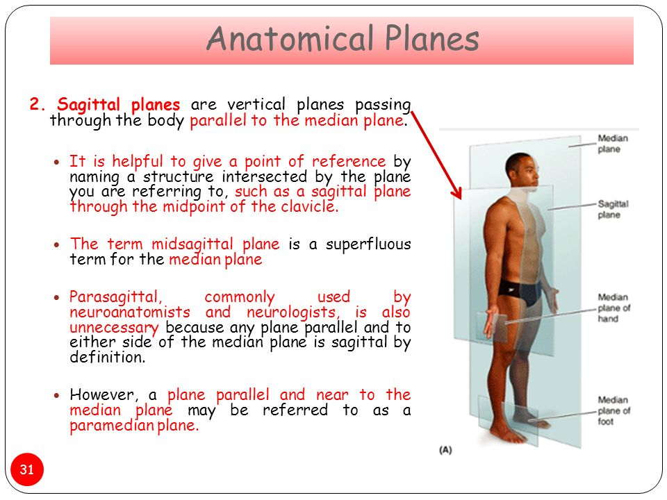 Sagittal plane definition anatomy 3197207 - follow4more.info