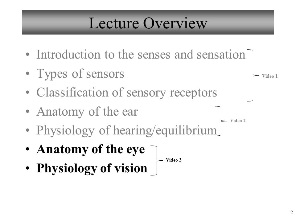 Moderno Anatomy And Physiology Of The Eye Video Ilustración ...