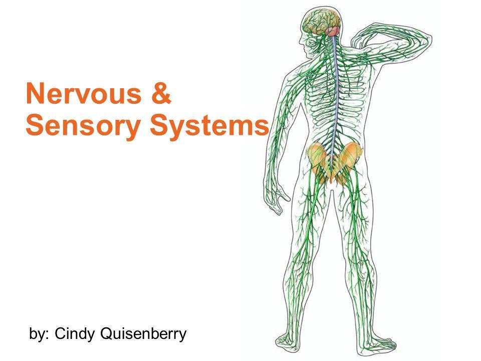 Nervous Sensory Systems Ppt Video Online Download