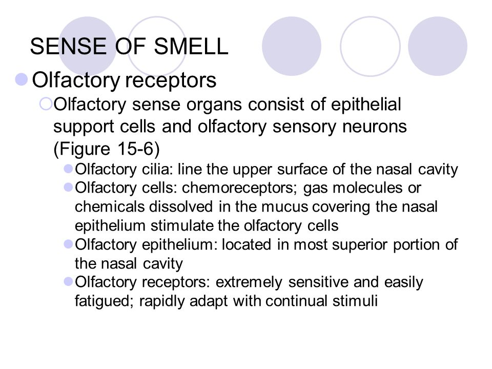 olfactory senses essay Gustation and olfaction, better known as taste and smell, are chemical senses their receptors are sensitive to chemical molecules, which differ from the other senses that detect forms of energy gustation and olfaction are intertwined referred to as a common chemical sense, both must.