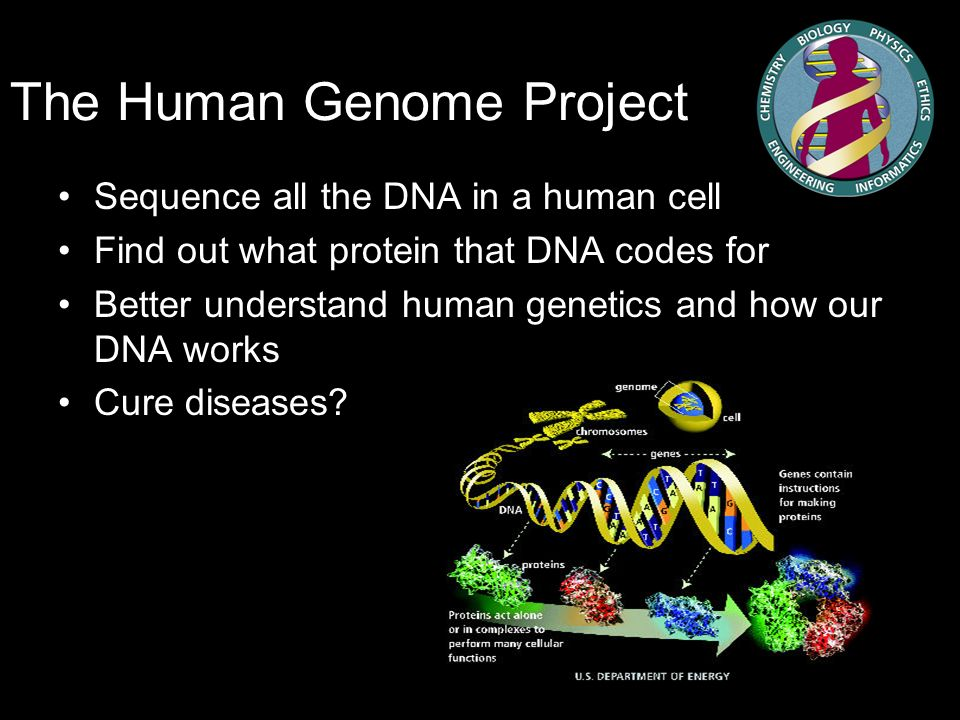 what are genome projects and dna Project began in 1990 as a $3 billion, 15-year effort 18 countries participate in the worldwide effort about 3 yrs ago -a private company - celera announced that the human genome will be completed within 3 years the human genome was immediately associated with additional sequencing projects - microbial, pathogen, plants, fugu.