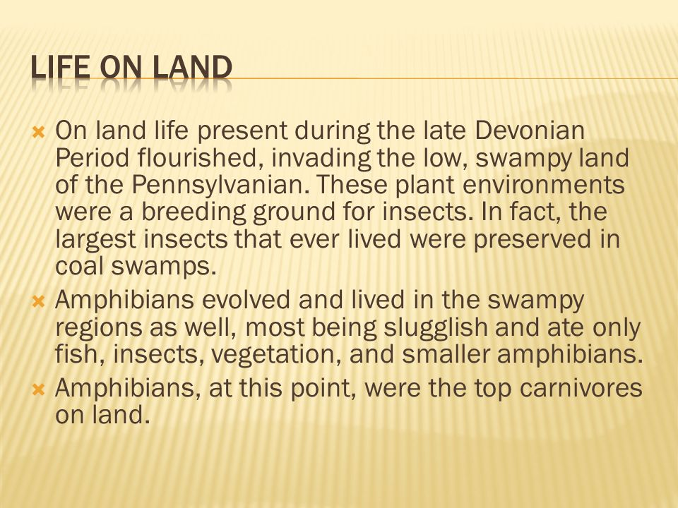 Devonian Period Insects