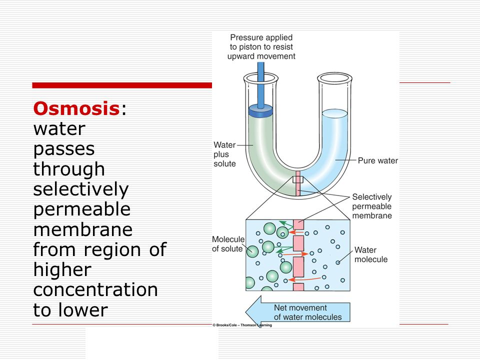 Osmosis: water passes through selectively permeable membrane from region of higher concentration to lower