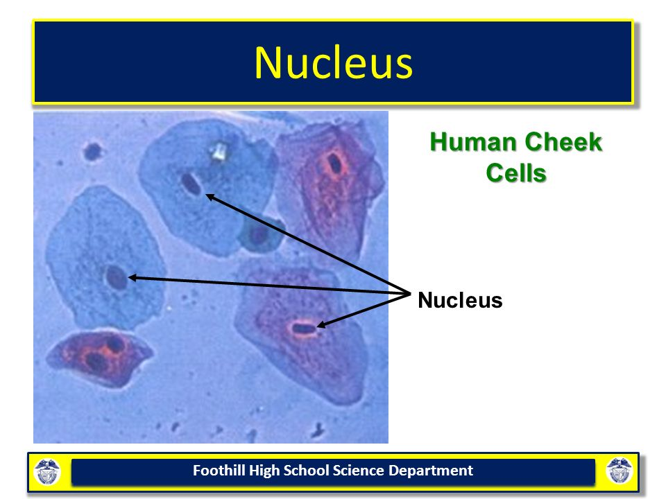 Cell Structure & Function - ppt video online download