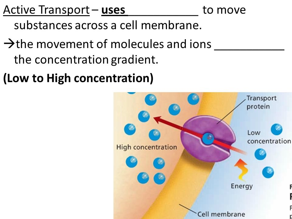 report cell transport Lab #3 - membrane transport lecture notes in today's experiments we will explore membrane transport processes, focusing on passive transport, specifically diffusion of molecules through various types of matter and across semipermeable membranes.