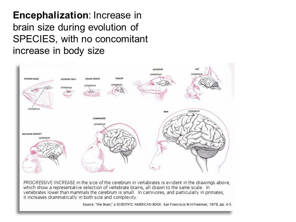 Reduce brain swelling drug photo 3