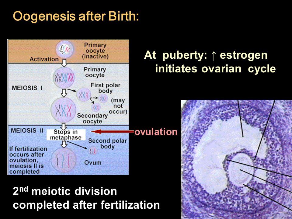 reproduction development ppt