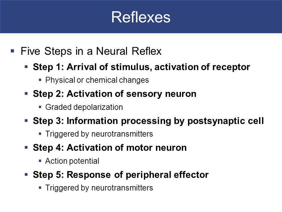 Spinal Cord and Reflexes - ppt download | 960 x 720 jpeg 78kB