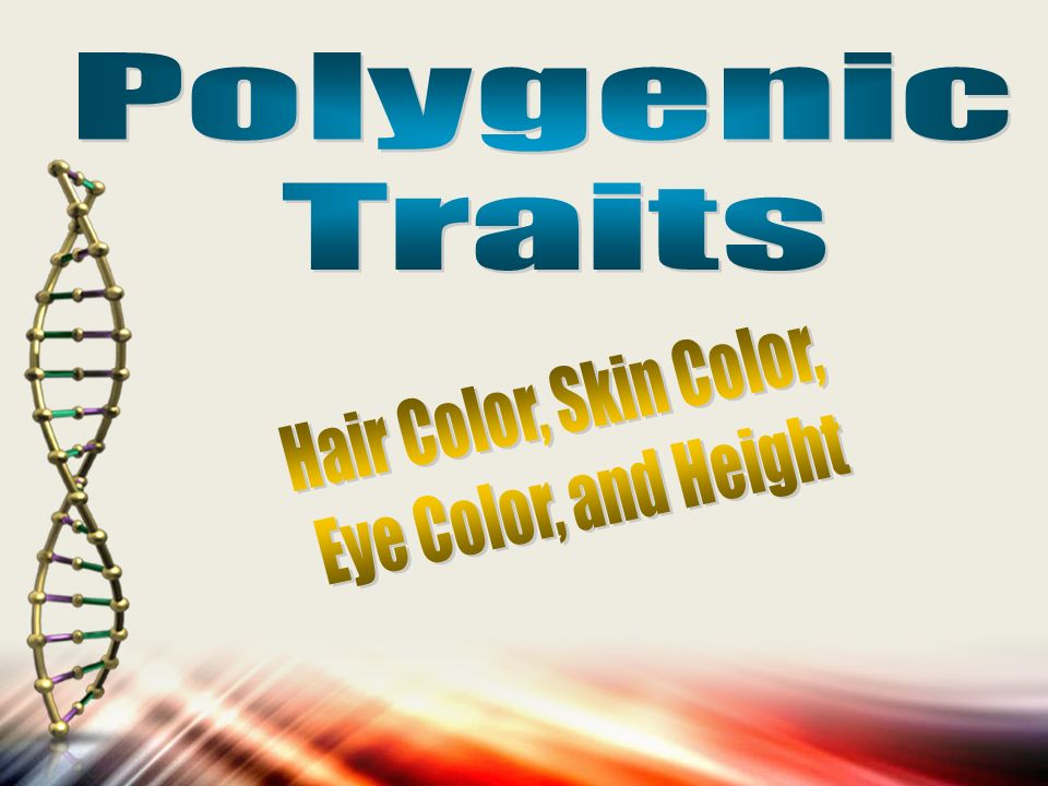 Polygenic Traits Hair Color, Skin Color, Eye Color, and ...