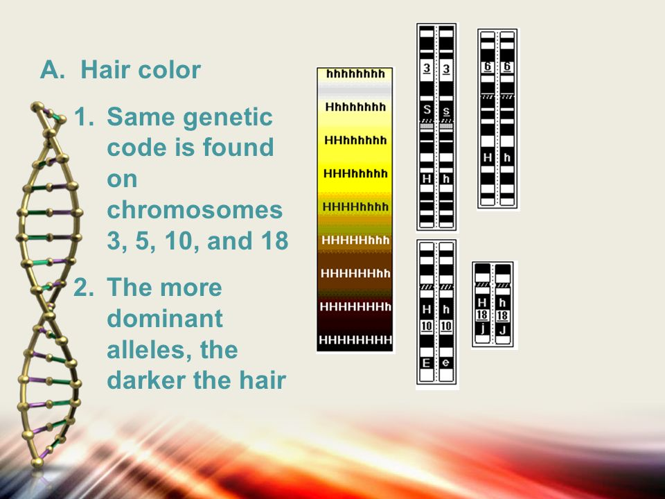 Polygenic Traits Hair Color Skin Color Eye Color And Height