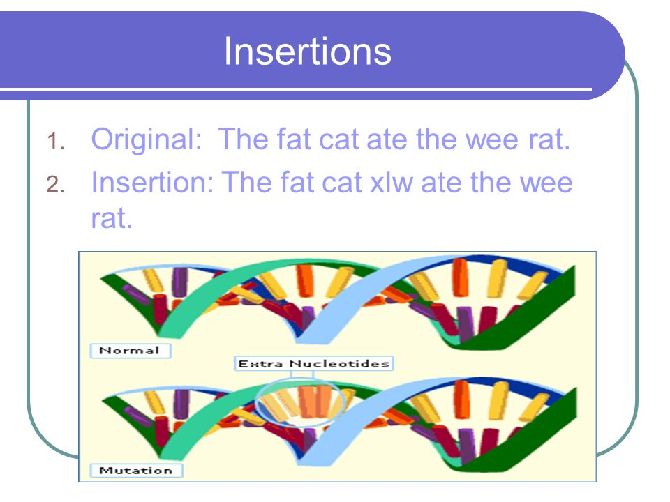 Insertions Original: The fat cat ate the wee rat.