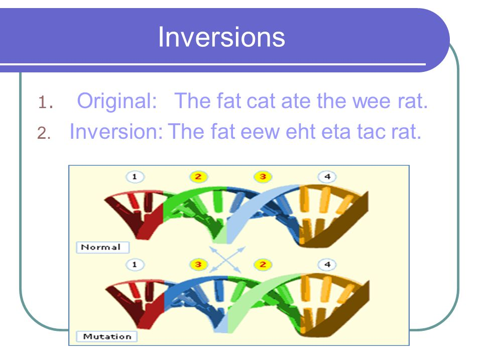 Inversions Original: The fat cat ate the wee rat.