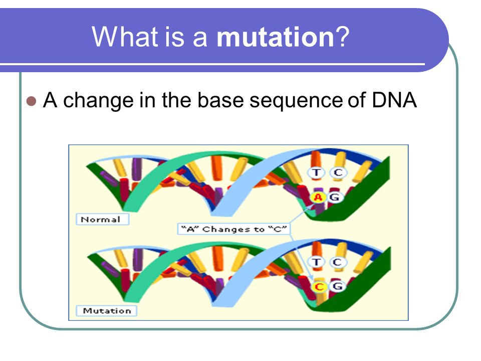 What is a mutation A change in the base sequence of DNA