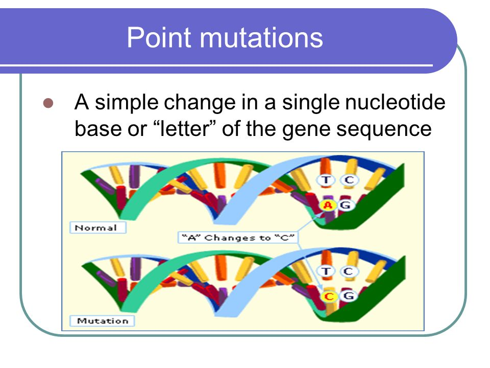 Point mutations A simple change in a single nucleotide base or letter of the gene sequence