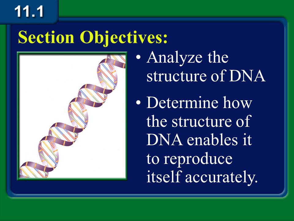 an introduction to the analysis of deoxyribonucleic acid also known as dna Deoxyribonucleic acid (dna) course introduction + forensic science and law lecture this machine revolutionized forensic dna analysis in the late 1980s once it.