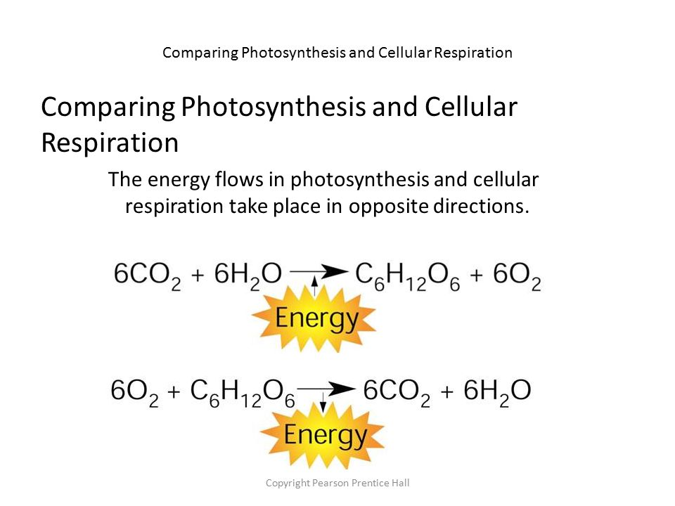 Cellular Respiration ppt video online download – Comparing Photosynthesis and Cellular Respiration Worksheet