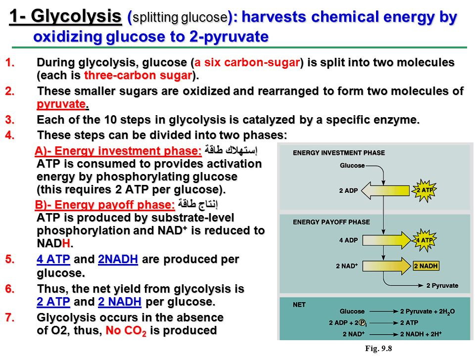 Section B: The Process of Cellular Respiration - ppt download