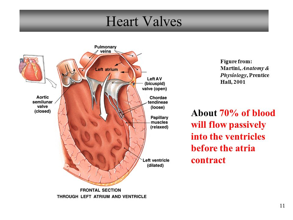 Anatomy heart valves 7071507 - follow4more.info
