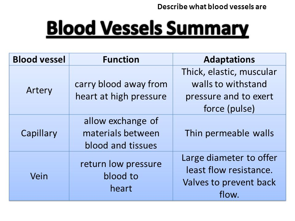 Why Does Our Heart Beat To Pump Blood Around The Body