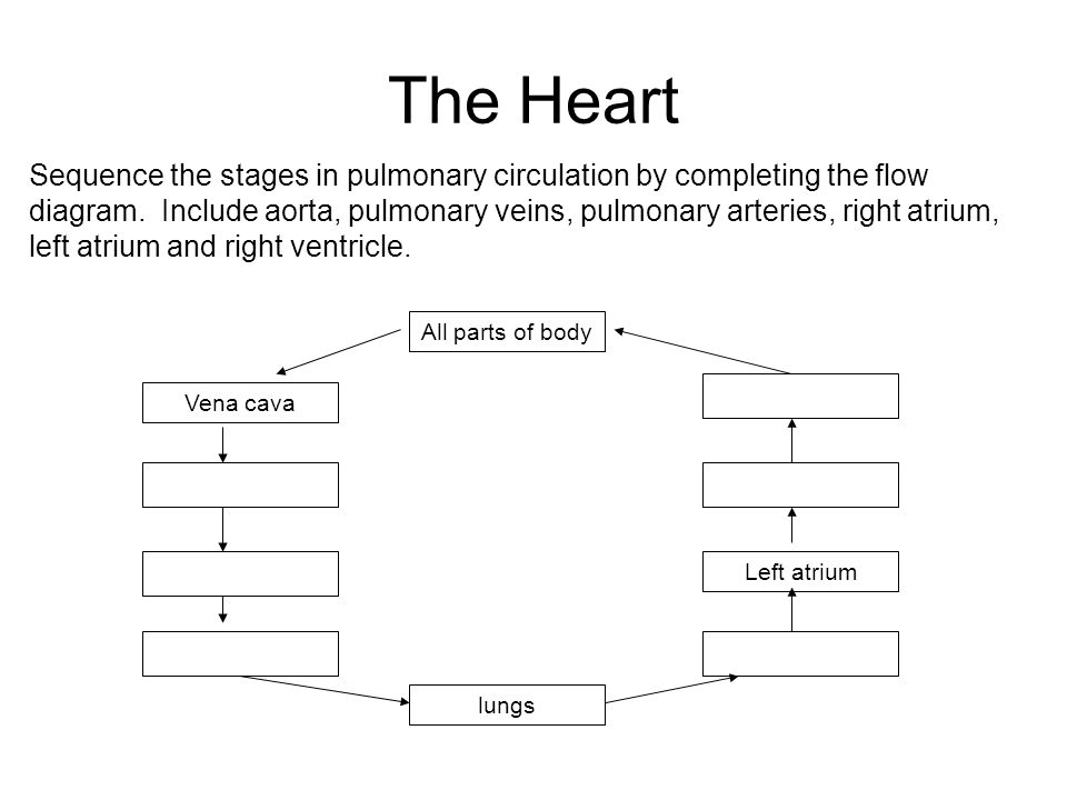 section 1  u2013 the circulatory system