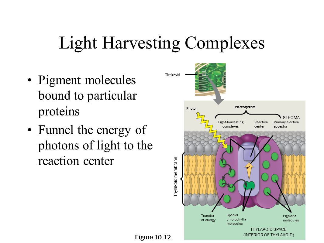 What is the relationship between photosynthesis