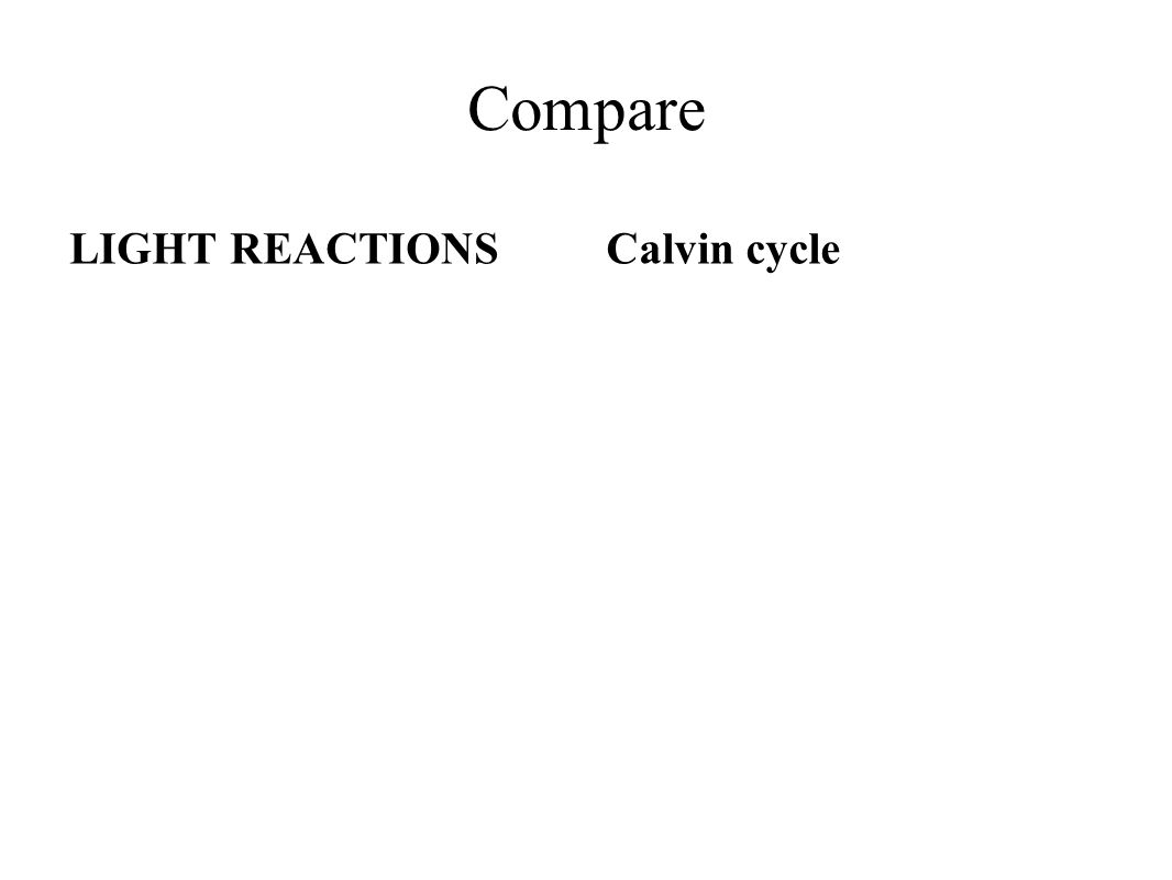 what is the relationship between light reaction and calvin cycle